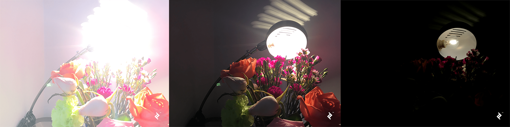 Three versions of the same image of flowers, one so dark that most of the photo is black, one normal-looking, albeit with slightly unfortunate lighting, and a third with the light cranked up so high that it's hard to see the flowers in the foreground