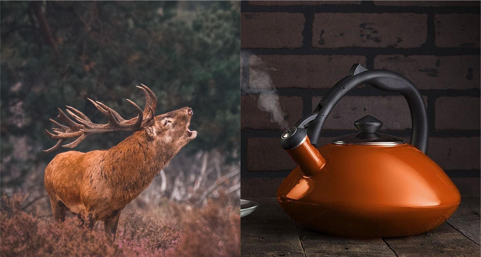An elk bellows and a kettle whistles to demonstrate UX sound design