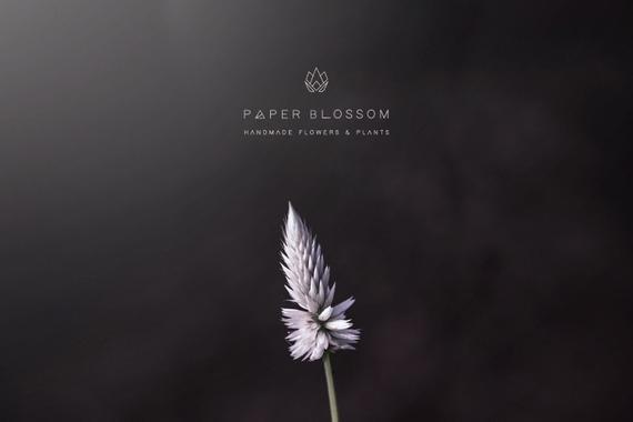 Paper Blossom's New Branding