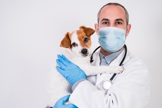 Due Diligence of Tech-enabled Veterinarian Healthcare